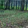 Testing Garden Strategies