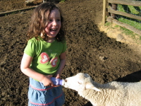 Young Girl Feeding Lamb