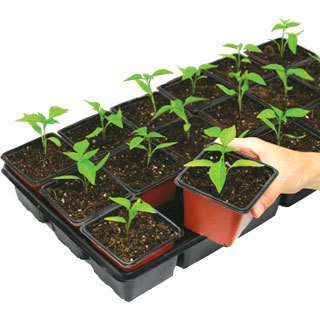 When to Plant Seeds