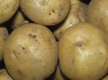 Irish Cobbler Heirloom Potatoes