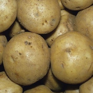 Heirloom Seed Potatoes